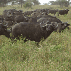 3 Days (2 Nights) Serengeti/Ngorongoro Crater